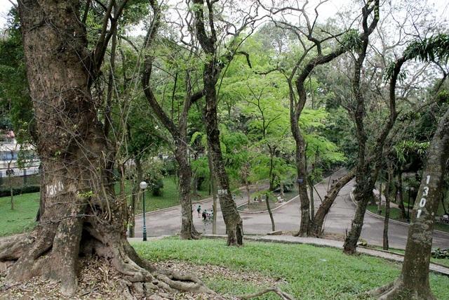 Công viên Bách Thảo được ví là lá phổi xanh của Hà Nội. Ngoài quần thể sưa đỏ quý hiếm bậc nhất hiện nay, trong công viên còn bảo tồn rất nhiều loại cây cổ thụ, các giống cây cỏ lạ độc đáo từ khắp mọi nơi trên thế giới.