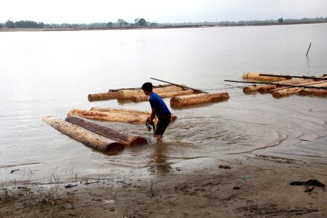 Số gỗ ươi được phát hiện trên sông Thu Bồn