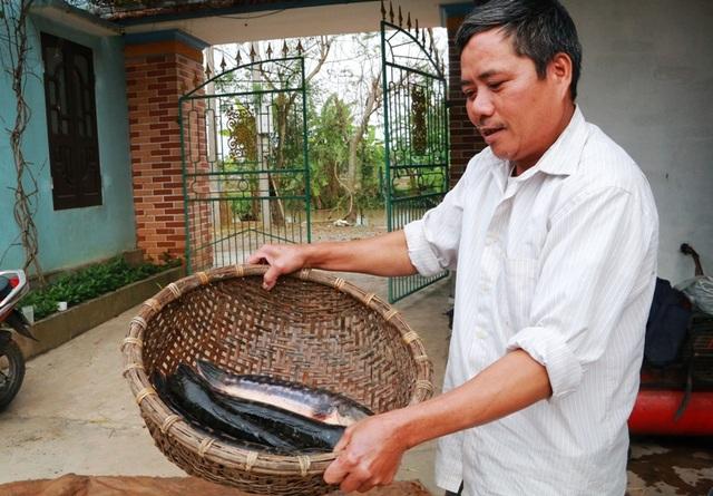 Một năm thu hoạch 1 vụ cá lóc bông, gia đình ông Nhượng lãi trên 100 triệu đồng.