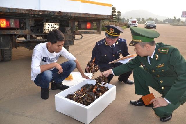 Lực lượng chức năng ở cửa khẩu quốc tế Lào Cai kiểm tra sản phẩm tôm hùm xuất khẩu sang Trung Quốc sáng ngày mồng 1 Tết Đinh Dậu 2017.