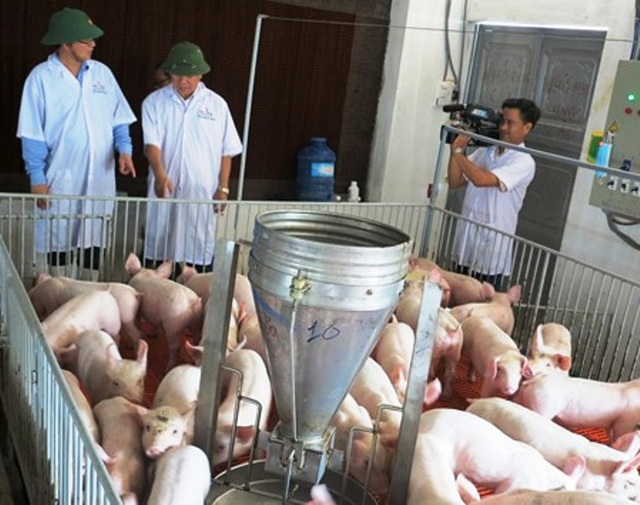 Chủ tịch UBND tỉnh Bình Định Hồ Quốc Dũng (trái) trực tiếp về huyện Hoài Ân - nơi được xem là Thủ phủ heo miền Trung kiểm tra, chỉ đạo các ngành chức năng giải cứu người chăn nuôi heo của tỉnh