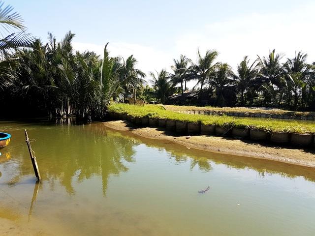 Đổ bê tông lấn kênh mương trong rừng dừa