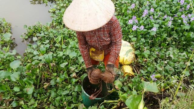 Nhờ nghề đặt lờ bắt cáy, nhiều nông dân ở Ninh Bình có thu nhập cao, đời sống được nâng lên, con cái được học hành đến nơi.