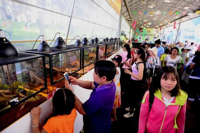 Rất đông du khách đến tham quan khu trưng bày bò sát.