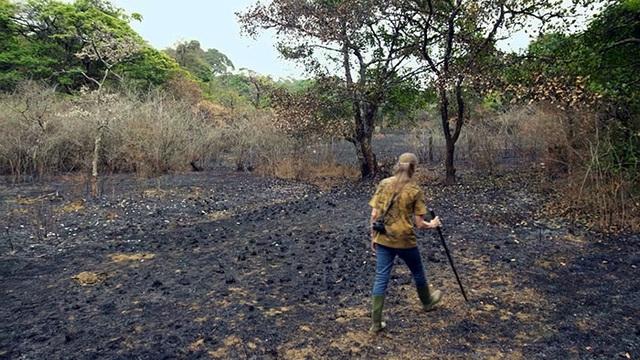 Quận Kodagu ở miền nam Ấn Độ đang phải chứng kiến sự sụt giảm diện tích rừng nghiêm trọng.