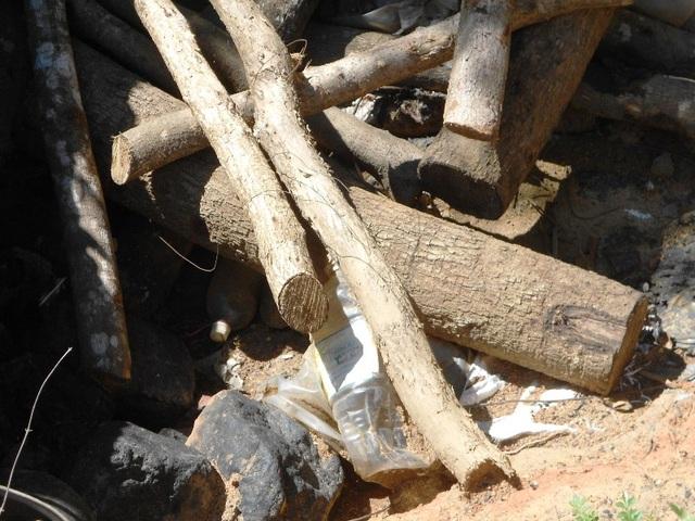 Gỗ (củi) được cưa thành đoạn ngắn để đưa vào hầm than