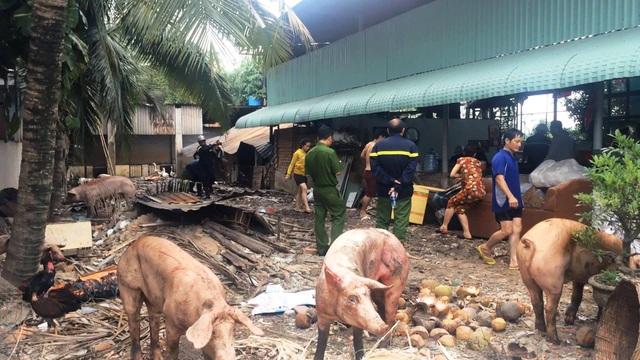 Vụ cháy gây thiệt hại làm hàng chục con heo chết và bị thương.