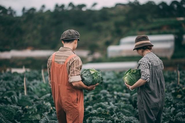 Bộ ảnh cưới bình dị của đôi bạn trẻ giữa... cánh đồng bắp cải - 14