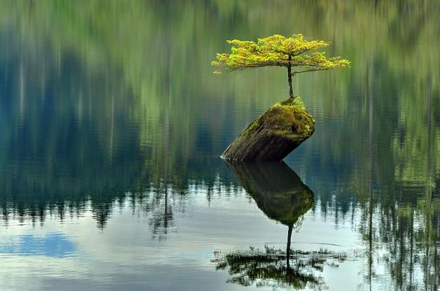 Cây mọc trên một khúc gỗ nổi lên khỏi mặt nước.