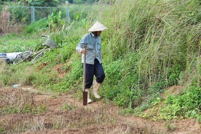 Dế cơm thường sống ở những khu vực gò cao, đất cát.... Anh Bình ở phường Long Hòa có nhiều năm gắn bó với nghề săn dế cơm bán...