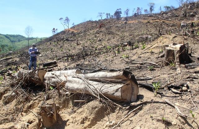 Hiện cơ quan chức năng đã khởi tố 8 nghi phạm, trong đó bắt giam 4 đối tượng liên quan đến vụ phá gần 61ha rừng tại huyện An Lão (Bình Định)