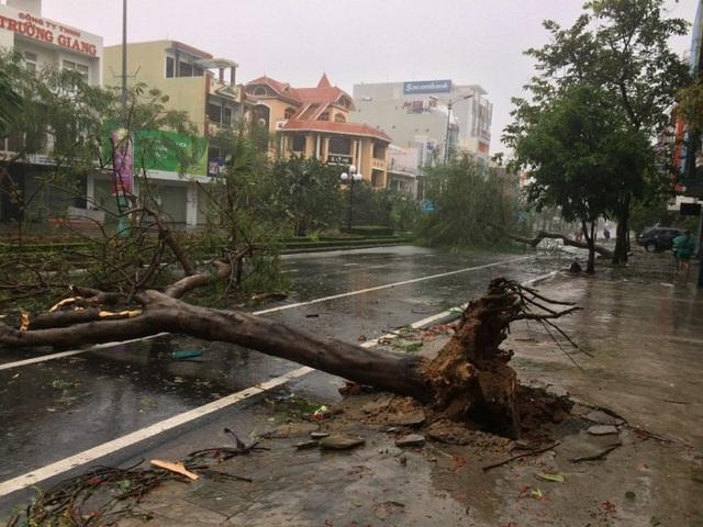 Cây cối đổ la liệt trên đường phố ở Phú Yên.