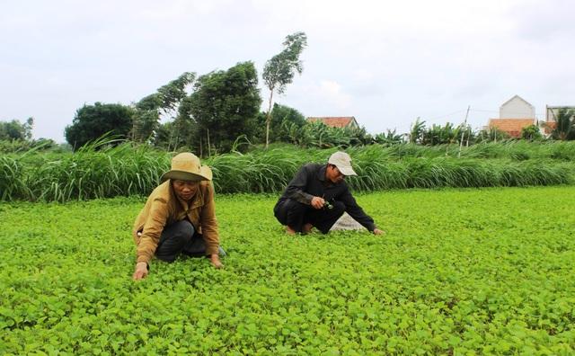 Người dân ở đây chủ yếu trồng các loại rau để cải thiện kinh tế, nhưng giờ mất đất họ chẳng biết lấy gì để canh tác.