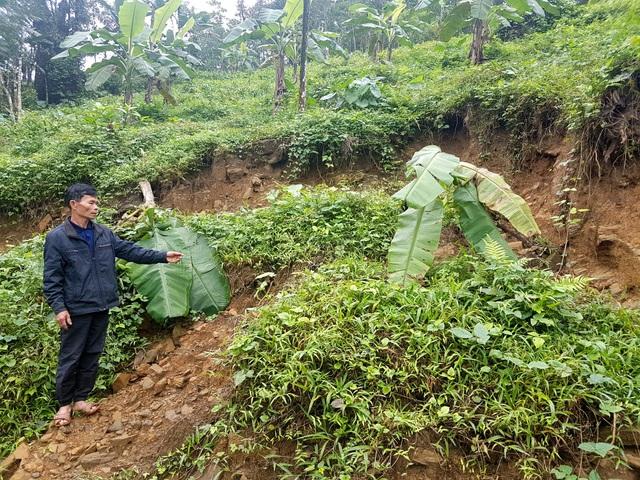 Quả đồi Dương Lách (ở thôn 5 xã Tiên Hiệp) sau nhà ông Quang đang bị trụt đất, sạt lở
