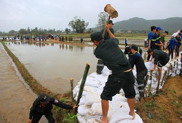 Các lực lượng ĐVTN tỏa khắp các khu vực ruộng đồng bị ảnh hưởng sa bồi thủy phá để khắc phục nhằm đảm bảo cho nhân dân sản xuất lúa vụ Đông Xuân kịp thời.