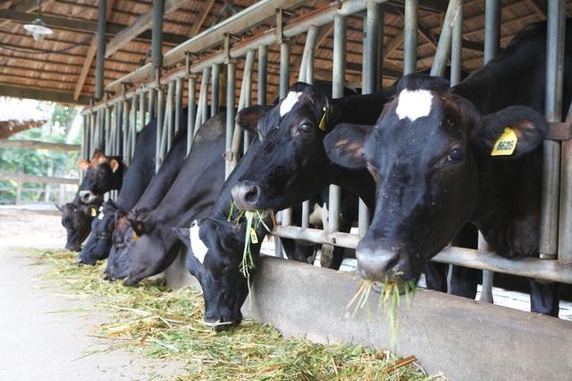 Hơn 20 năm qua, FrieslandCampina Việt Nam đã hỗ trợ nông dân theo sát những phương pháp chăn nuôi hiện đại và hiệu quả