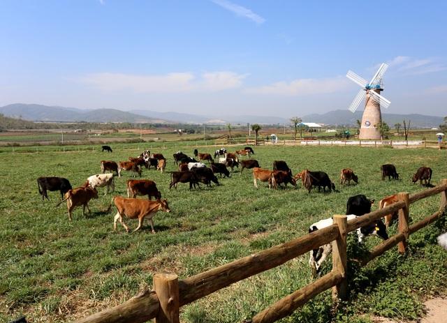 Với trang trại bò sữa tiêu chuẩn organic châu Âu đầu tiên tại Việt Nam, Vinamilk đã tiên phong dẫn đầu xu hướng organic nhằm mang đến những sản phẩm organic cao cấp giàu dinh dưỡng từ thiên nhiên tốt cho sức khỏe.