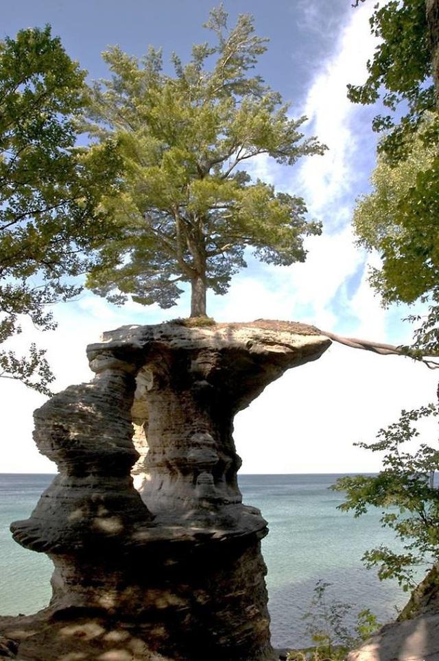 Cây mọc trên một tảng đá nhô ra phía biển.