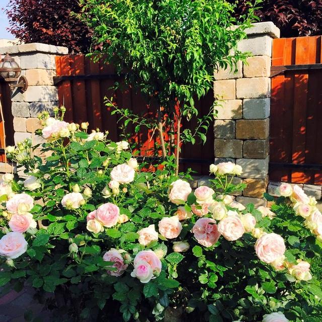 """Ngôi nhà hoa hồng """"đẹp như cổ tích"""" của nữ Việt kiều Hungary - 1"""