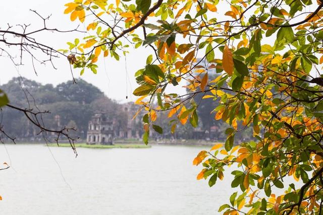 Đi trên những con phố như: Thanh Niên, Hồ Hoàn Kiếm, Phan Đình Phùng… những ngày này dễ dàng bắt gặp những hàng cây rực lá vàng, lá đỏ. Và đây cũng là lúc, người Hà Nội cảm nhận rõ rệt khoảnh khắc giao mùa từ xuân sang hạ. Trong ảnh là góc Hồ Gươm vừa thân quen vừa lạ lẫm bởi sắc vàng của lá.