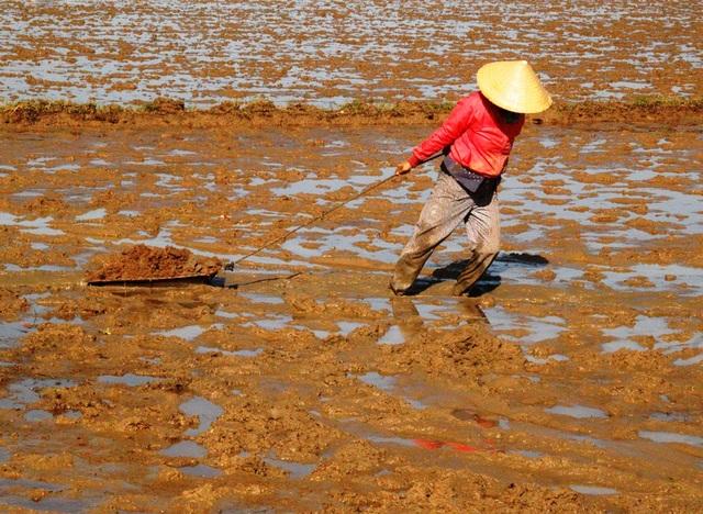 Những phụ nữ dốc sức kéo đất san cho phẳng mặt ruộn để chuẩn bị sạ lúa giống