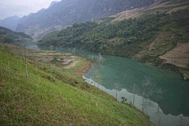 Những vạt cây gạo ven sông bị ngập nước sau khi đập thủy điện Nho Quế 2 được xây dựng.