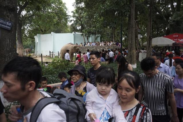 Tại các vị trí tham quan chuồng thú cũng không còn chỗ trống.