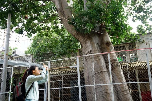 Nhiều sinh viên thường đến chụp hình loại cây có nguồn gốc từ châu Phi.