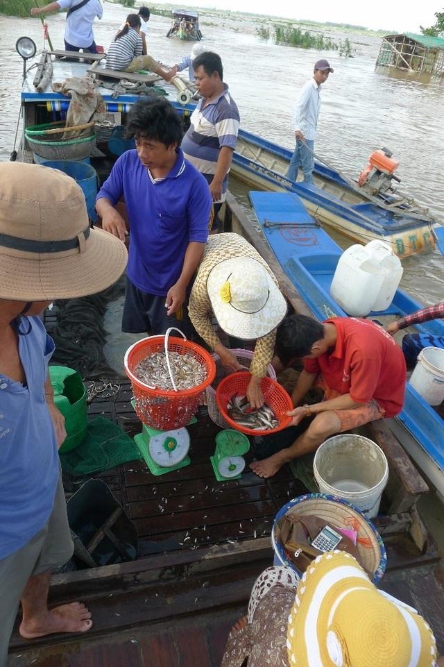 Chợ cá đồng trên kênh Giuộc xom tụ nhất là từ 7 -9 giờ sáng hàng ngày