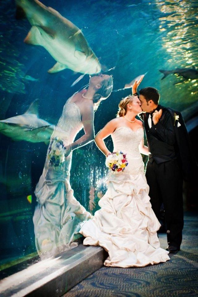 Khoảnh khắc cô dâu hôn chú rể nhưng trên hình phản chiếu lại giống như đang hôn chú cá mập.