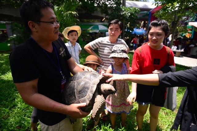 Du khách thích thú sờ vào chú rùa.