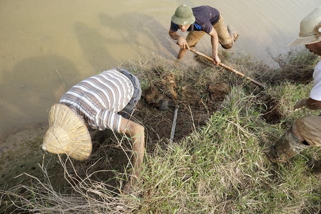 Theo chân thợ săn chuột đồng ở ngoại thành Hà Nội - 12