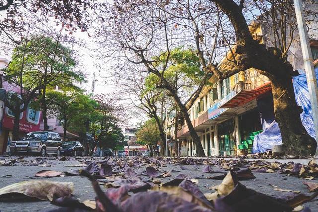 """Hàng cây bàng trên phố thay áo mới """"nhuộm đỏ"""" những con đường tạo nên khung cảnh bình yên đến lạ."""