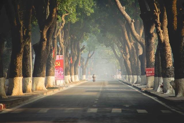 Đi trên những con đường với hàng cây mùa thay lá khiến mọi người đều cảm nhận được một sự dịu dàng, trầm lắng khác hẳn cuộc sống ồn ào, tất bật hiện hữu xung quanh.