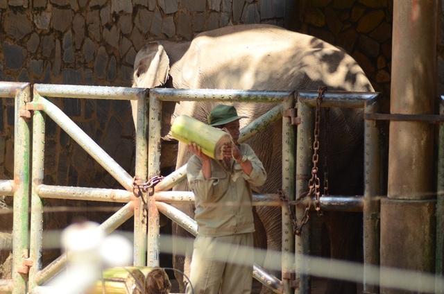 Mỗi loài thú đều có một thức ăn riêng do các nhân viên chăm sóc cho ăn.