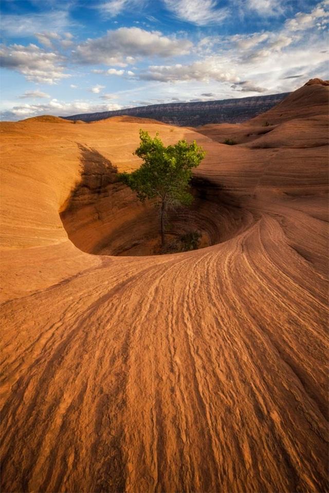 Cây nằm giữa hoang mạc khô cằn