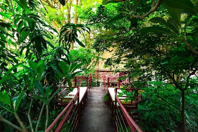Những ngôi nhà cây được Đào Anh Khánh lên ý tưởng và bắt tay vào xây dựng cách đây gần 20 năm, trong khuôn viên rộng 2.500 m2
