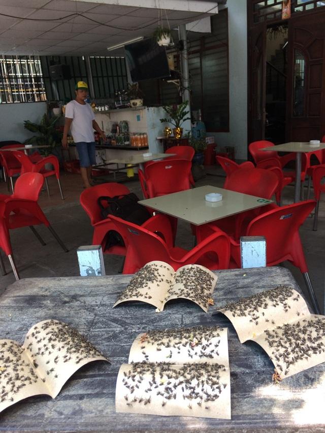 Các quán ăn uống đối diện Công ty Kwong Lung – MeKo bị ruồi bủa vây.