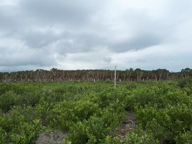 Đầu năm 2017, HTX của ông Lương được cấp hơn 4 hecta diện tích đất hoang hóa nằm ở khu vực khó khăn, khắc nghiệt nhất của xã Thạch Hải. Sau khi được cấp đất, trong thời gian ngắn toàn bộ diện tích hoang hóa này đã được ông cùng một số người dân cải tạo để trồng cây ăn quả và chăn nuôi.