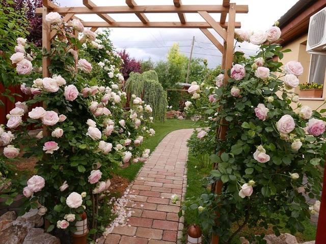 Ngoài thời gian làm việc, phần lớn thời gian chị Thảo dành chăm sóc vườn hoa