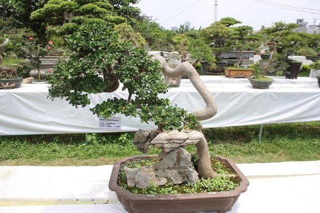 Theo nhiều nghệ nhân, điều tinh túy của nghệ thuật bonsai là có thể dùng những kỹ thuật đặc sắc để tạo ra một cây cảnh mini mang dấp cổ thụ cả trăm năm. Chơi bonsai không chỉ đơn giản là biểu diễn kỹ nghệ cắt tỉa cây mà phải thổi hồn biến tác phẩm giống như bức tranh phong cảnh, sơn thủy hữu tình... Trong đó, bộ gốc, rễ.. mang yếu tố quyết định đến giá trị và đẳng cấp của một cây bonsai đẹp.