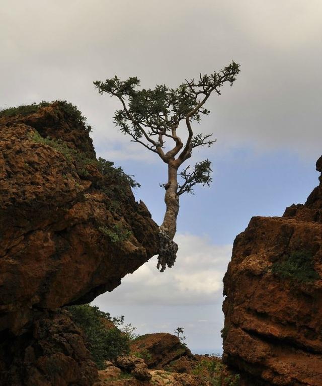 Cây mọc trên vách đá cheo leo