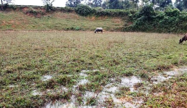 Đất bỏ hoang khi nước rất ít được người dân dùng máy nhỏ bơm từ khe suối vào.
