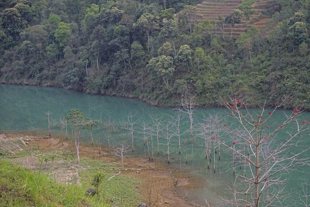 Nhiều cây cối mọc ven sông nay đã ngập chết dưới lòng sông khi các đập thủy điện chặn dòng.