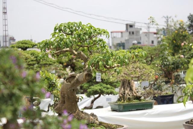"""Triển lãm """"Hoa và nghệ thuật bonsai"""", được xem là triển lãm đầu tiên về cây cảnh bonsai được tổ chức ở Hà Nội. Trong đó, quy tụ hơn 200 cây cảnh có vóc dáng độc lạ, uốn tỉa cầu kỳ của các nghệ nhân nổi tiếng, hàng đầu cả nước. Nhiều cây được đánh giá là """"hiếm có, khó tìm"""" ở Việt Nam."""