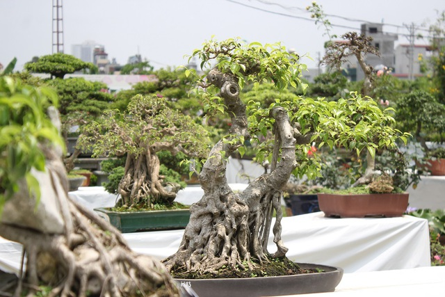 Để tạo dáng một cây cảnh bonsai người chơi phải mất một thời gian dài, từ 1 – 2 năm thậm chí là hàng chục năm mới tạo nên một tác phẩm ưng ý. Trong cuộc sống hiện đại khi không gian ngày càng bị thu hẹp thì thú chơi này càng nở rộ và được nhiều người ưa chuộng bởi tính tiện lợi, nhỏ gọn nhưng vẫn toát lên được dáng vẻ, thần thái tinh tế của một cây cảnh đẹp.