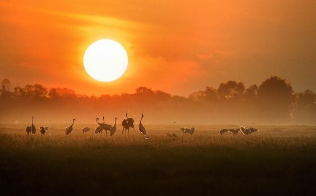 Matt Adams nhận xét Thật là một khoảnh khắc tuyệt vời đã diễn ra trước ống kính của bạn. Màu cam từ mặt trời thực sự đã thêm một tông màu đẹp cho hình ảnh này và vị trí của chú cò trên cỏ làm cho hình ảnh trở nên hoàn hảo. (Click vào đây để xem ảnh kích thước lớn)