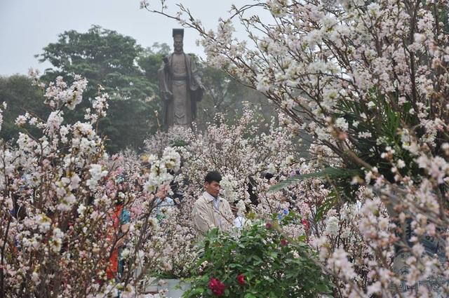 Trước đó, BTC lễ hội hoa anh đào khẳng định lễ hội sẽ không có hoa giả, hoa héo