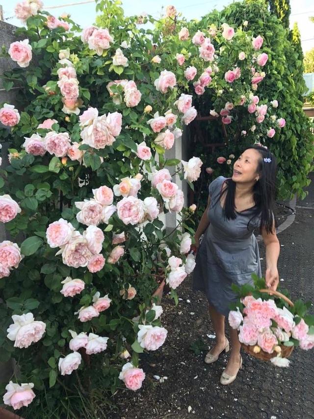 Chị Thảo cho biết chị có một tình yêu rất đặc biệt với hoa hồng