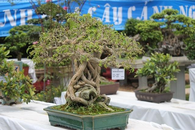 Một cây cảnh bonsai có bộ rễ độc đáo, lạ mắt được trưng bày tại triển lãm